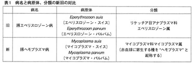 豚エペリスロゾーン病~豚のヘモ...